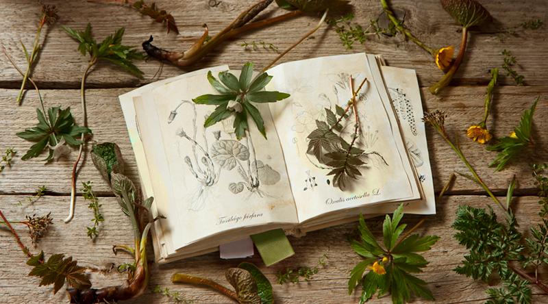 Ищем в книге растений