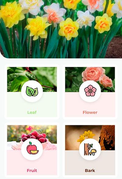 Выбор растения